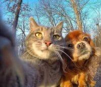 سلفی سگ و گربه