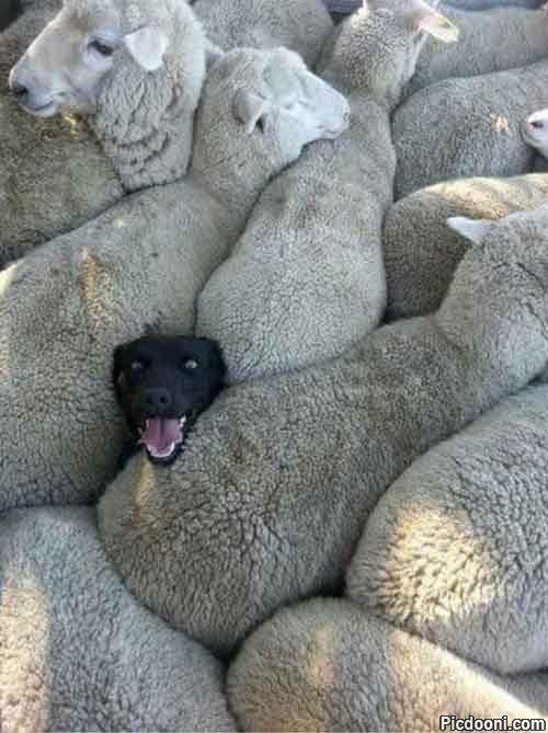 گاهی باید از سگها آموخت!
